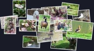 Pensthorpe birdswaterpark weergegeven